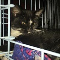 Adopt A Pet :: Tina - Monrovia, CA