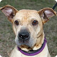 Adopt A Pet :: Jilly - Joliet, IL