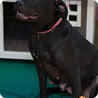 Adopt A Pet :: Breezee - Evansville, IN