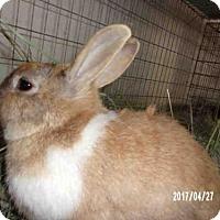 Adopt A Pet :: SHINE - Santa Maria, CA