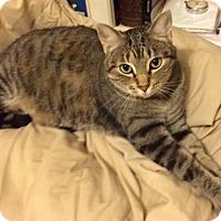 Adopt A Pet :: Tiggy - Flower Mound, TX