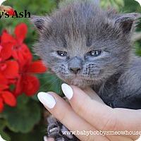Adopt A Pet :: Ash or Stoney - Temecula, CA