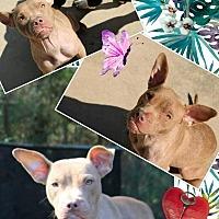 Adopt A Pet :: Penny - Blountstown, FL