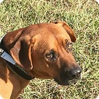 Adopt A Pet :: #34 - Seguin, TX