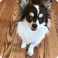 Adopt A Pet :: Poncho - Florence, KY - Dayton, OH