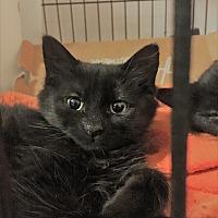 Adopt A Pet :: Cookie - Toronto, ON