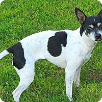 Adopt A Pet :: Cassie Woobles - Oklahoma City, OK