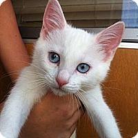 Adopt A Pet :: Prancer - Santa Monica, CA