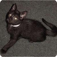 Adopt A Pet :: Bear - Franklin, NC