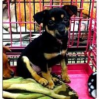 Adopt A Pet :: Emilio - Fowler, CA