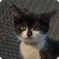 Adopt A Pet :: Cagney - Brooklyn, NY