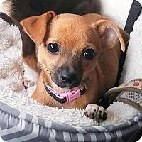 Adopt A Pet :: Electra - AUSTIN, TX