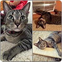 Adopt A Pet :: Kayleigh - Eagan, MN