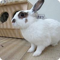 Adopt A Pet :: HerSheKiss - Newport, DE