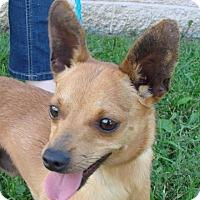 Adopt A Pet :: Bandit - Erwin, TN