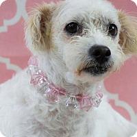 Adopt A Pet :: Makino - Houston, TX