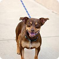 Adopt A Pet :: Dante - Chino Hills - Chino Hills, CA