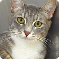 Adopt A Pet :: Gracie - Dublin, CA