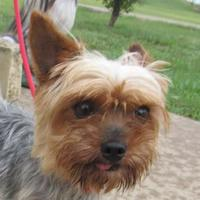 Adopt A Pet :: Small Fry - Winfield, KS