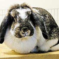 Adopt A Pet :: CARMELINDA - Newport, KY