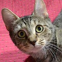 Adopt A Pet :: Elvira  171821  (Hurricane) - Atlanta, GA