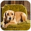 Photo 1 - Labrador Retriever/Beagle Mix Dog for adoption in Portland, Oregon - Lil' Buddy