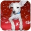 Photo 1 - Chihuahua Mix Puppy for adoption in Jackson, Michigan - Bumble Bee