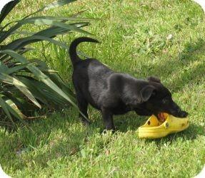 Labrador Retriever Mix Dog for adoption in Hancock, Michigan - Maggie