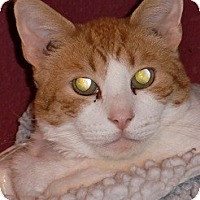 Adopt A Pet :: CHESTER - Crescent City, CA