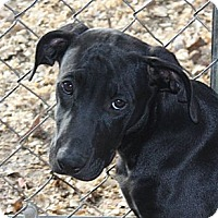 Adopt A Pet :: Conner - in Maine - kennebunkport, ME