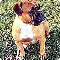 Adopt A Pet :: Georgette - Newport, VT