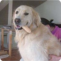 Adopt A Pet :: Bennett - Denver, CO