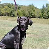 Adopt A Pet :: Carson - Staunton, VA