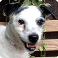 Adopt A Pet :: Jasper - Rhinebeck, NY