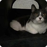 Adopt A Pet :: Kenny - Laguna Woods, CA