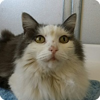 Adopt A Pet :: Jingles - Scottsdale, AZ