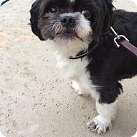 Adopt A Pet :: Milo - Sacramento, CA