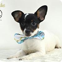 Adopt A Pet :: Noodle - Kenner, LA