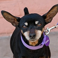 Adopt A Pet :: *Eulima Seashell -- Adoptable Hospice - Pittsburg, CA