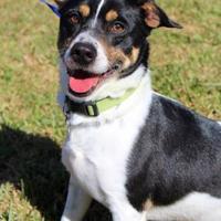 Adopt A Pet :: Blake - Bradenton, FL