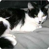 Adopt A Pet :: Lily - Etobicoke, ON