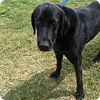Adopt A Pet :: Ophelia - Southampton, PA