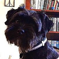 Adopt A Pet :: GLADI - ADOPTION PENDING - Los Angeles, CA