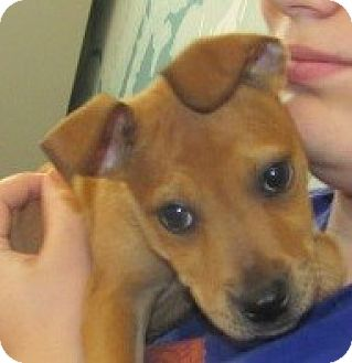 Hound (Unknown Type) Mix Puppy for adoption in Aiken, South Carolina - DEXTER