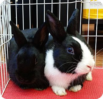 Dutch Mix for adoption in Edmonton, Alberta - Chip & Dale