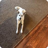 Adopt A Pet :: Otis - San Antonio, TX