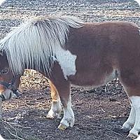 Adopt A Pet :: Trixie - Loudon, TN