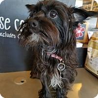 Adopt A Pet :: CHLOE - Inland Empire, CA