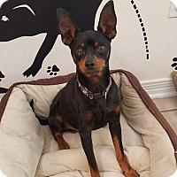 Adopt A Pet :: St. George - Ocean Springs, MS