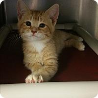 Adopt A Pet :: Nuttybar - Chippewa Falls, WI
